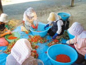 種子精製作業