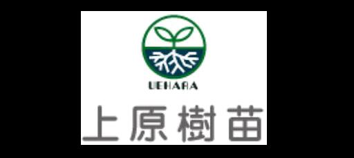 造林・緑化治山・海岸防災林・広葉樹苗木販売(有)上原樹苗